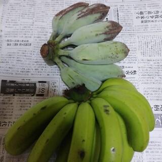 幻のアイスクリームブルーバナナに台湾系島バナナ 自然栽培 農薬不使用 激レア南国(フルーツ)