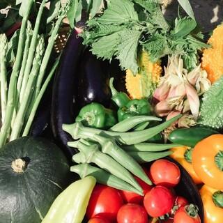 畑直送‼︎ コンパクトBOXいっぱいの野菜セット 無農薬野菜