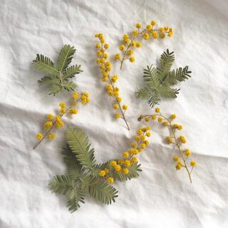 ミモザの花と葉っぱのドライフラワー(ドライフラワー)