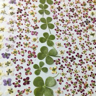 606 アリッサム  四葉のクローバー 押し花
