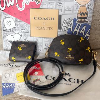 COACH - 新品 コーチ COACH ショルダーバッグ 財布 セット ウッドストック