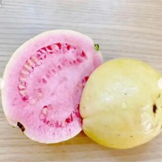 ピンク グヮバ種35粒(その他)