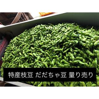 だだちゃ豆 規格外品 山形県鶴岡市特産の枝豆の王様 量り売り 季節限定品