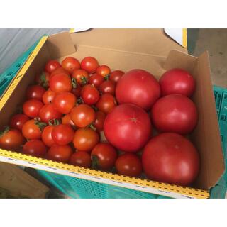 無農薬 アロイ&ステラトマト(野菜)