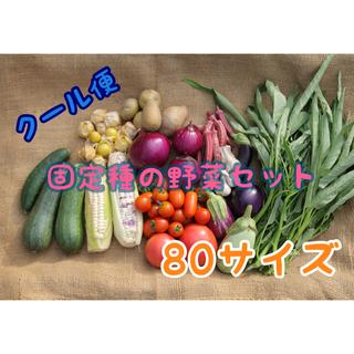 能登産 無農薬 おまかせ野菜セット 80サイズ(野菜)