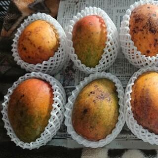 15 マンゴー 3kg 家庭用 傷黒点シワあり(フルーツ)