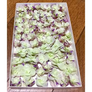 s⑤  銀の紫陽花が作ったオレガノ・ケントビューティー のドライフラワーです‼️(ドライフラワー)