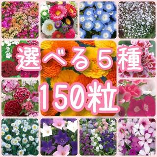 【花の種】選べる5種 150粒 種子(野菜)