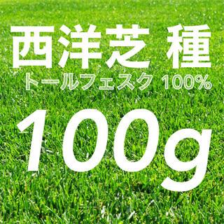【まき時】西洋芝の種 トールフェスク 100g種子。《2-2.5平米》芝生緑化(その他)