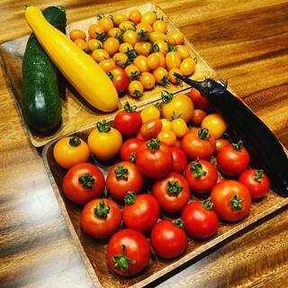 ミニトマトMIX詰め合わせ 1kg 有機無農薬栽培(野菜)