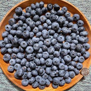 北海道産 ブルーベリー 無農薬 1kg 送料込 フルーツ ふるさと 果物(フルーツ)