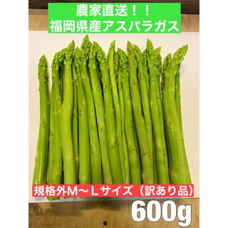 【福岡の近隣限定】福岡県産アスパラガス600g (規格外M〜Lサイズ訳あり品)(野菜)