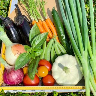 畑直送無農薬新鮮野菜