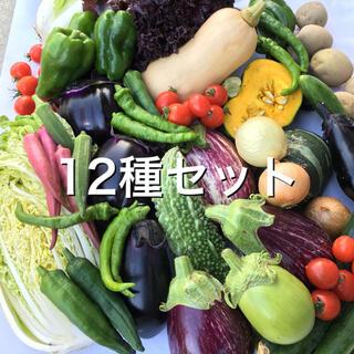 野菜BOX Lサイズ 12種セット