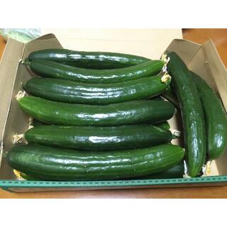 きゅうり 野菜詰め合わせ ネコポス(野菜)