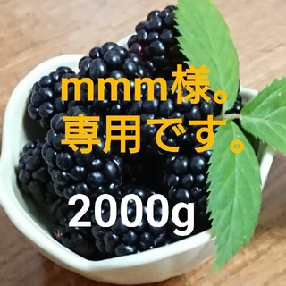 mmm様。専用です。 送料込 冷凍 ブラックベリー 2000g(フルーツ)