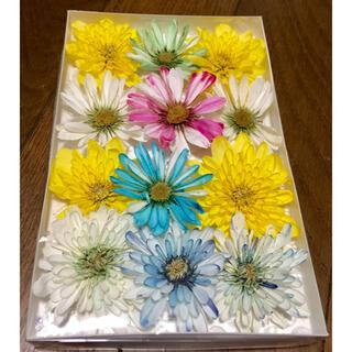 い①  銀の紫陽花が作った可愛い西洋マムのドライフラワーです‼️(ドライフラワー)