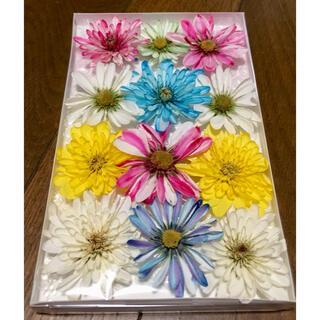 い②  銀の紫陽花が作った可愛い西洋マムのドライフラワーです‼️(ドライフラワー)