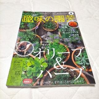 NHK 趣味の園芸 2021年 04月号(専門誌)