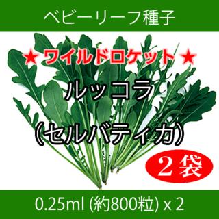 ベビーリーフ種子 B-30 ルッコラ(セルバティカ)0.25ml約800粒x2袋(野菜)
