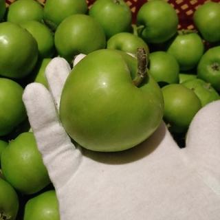 加工用摘果りんご20キロ(フルーツ)