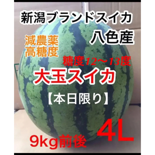 7/30迄!新潟ブランドスイカ 八色(やいろ)産 大玉スイカ 9kg前後 4L(フルーツ)