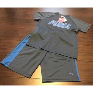 PUMA - 未使用 プーマ  Tシャツ ハーフパンツ 上下セット 150