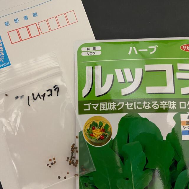 【プランター栽培】大葉50粒、バジル30粒以上、ルッコラ30粒以上。お得!! 食品/飲料/酒の食品(野菜)の商品写真