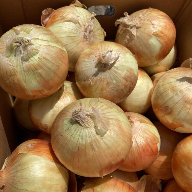 10kg  北海道 新玉ねぎ 食品/飲料/酒の食品(野菜)の商品写真