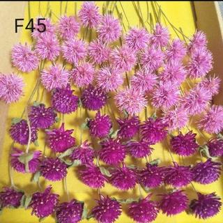 F45.ドライフラワー(千日紅&ゴンフレナ)(ドライフラワー)