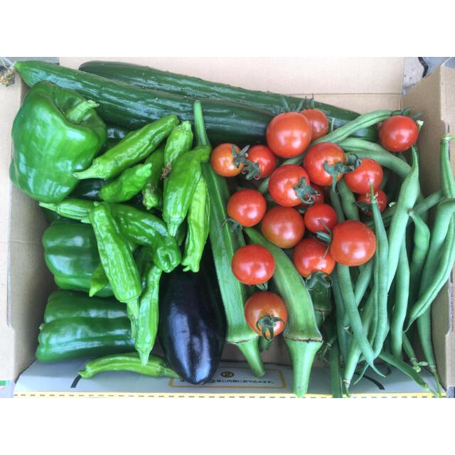 野菜詰め合わせ コンパクト 食品/飲料/酒の食品(野菜)の商品写真