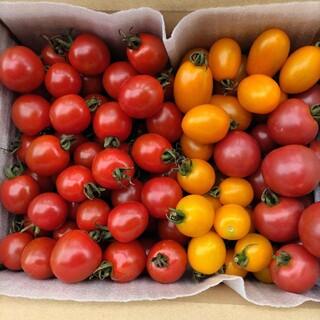 ミニトマト 2.1kg カラフル