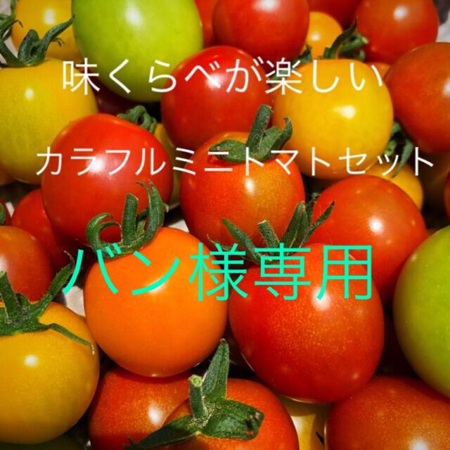 バン様専用ミニトマトカラフルMIX3キロ 食品/飲料/酒の食品(野菜)の商品写真