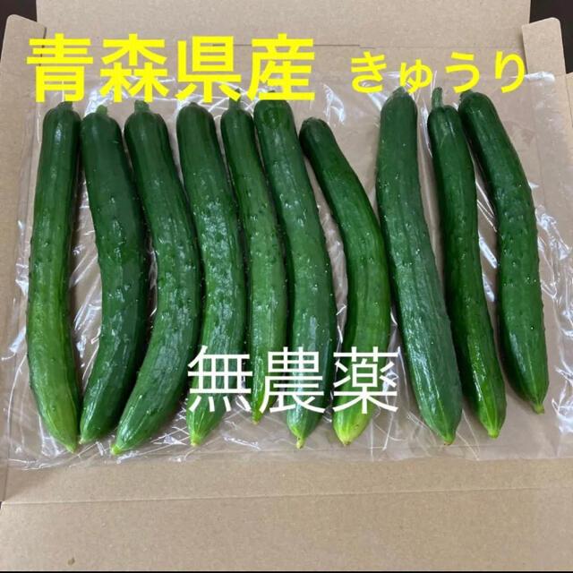 青森県産 きゅうり 無農薬 食品/飲料/酒の食品(野菜)の商品写真