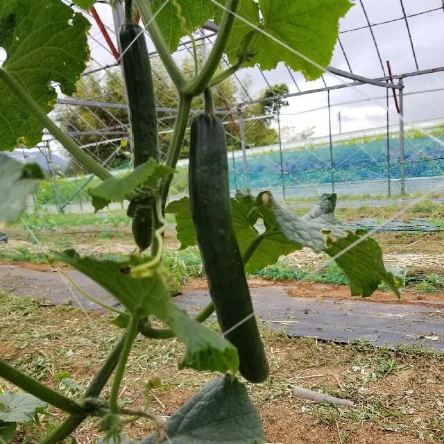 九州とれたて野菜セット 食品/飲料/酒の食品(野菜)の商品写真
