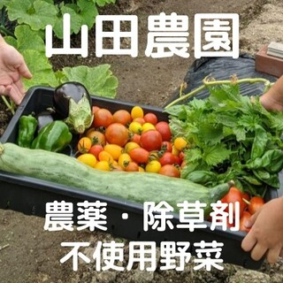 【受注収穫】農薬・除草剤不使用野菜の詰合せ(60サイズ箱)