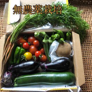 無農薬野菜 ズッキーニ・なす・オクラ・ミニトマト