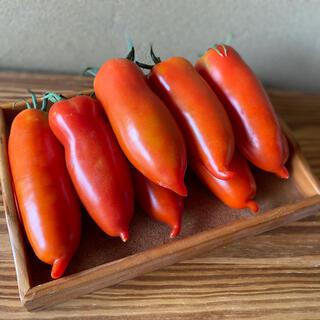 中玉イタリアントマト サンマルツァーノ約1キロ