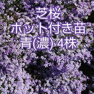 芝桜 ポット付き苗 8株(4種 × 2株)(その他)