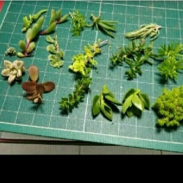 多肉植物 色々と詰合せ ハンドメイドのフラワー/ガーデン(プランター)の商品写真
