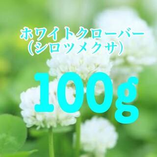 シロツメクサ、ホワイトクローバーの種 100g 20平米分。芝生、雑草対策に! (その他)