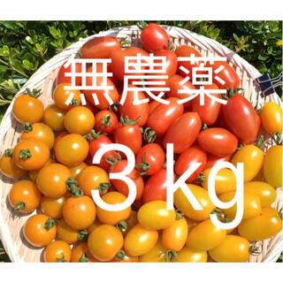 無農薬栽培 フルーツミニトマト