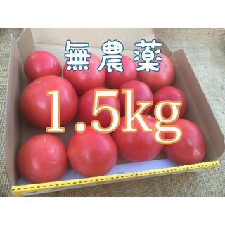 固定種 アロイ&世界一トマト 1.5kg(野菜)