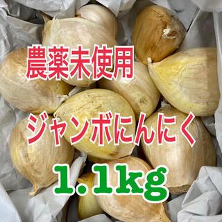 ジャンボにんにく 1.1kg 国産ニンニク 農薬未使用 1.1キロ(野菜)