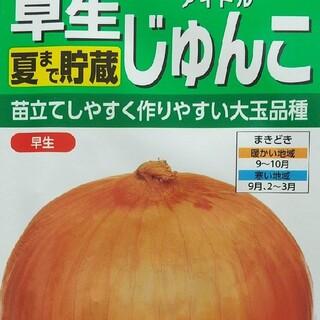 野菜の種      早生    アイドルじゅんこ(野菜)