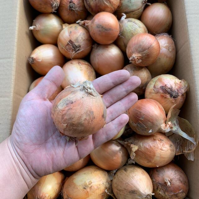 北海道産玉ねぎ 7キロ 食品/飲料/酒の食品(野菜)の商品写真