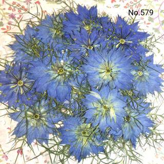 ♡new♡作家様必見♡ 可愛いニゲラのお花がいっぱい♡ 押し花セット