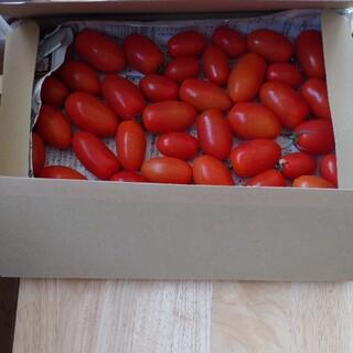 無農薬 新鮮ミニトマトアイコ