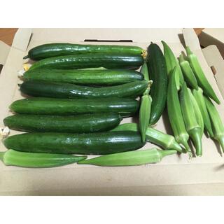 きゅうり オクラ 野菜詰め合わせ ネコポス(野菜)