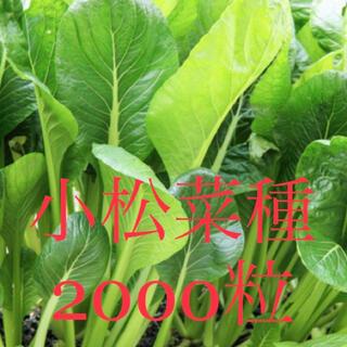 今年採取の小松菜種2000粒(野菜)